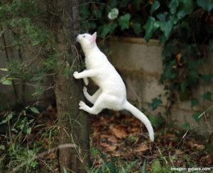 Fotografía de gato trepando a un árbol