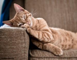Fotografía gato durmiendo sobre sofá